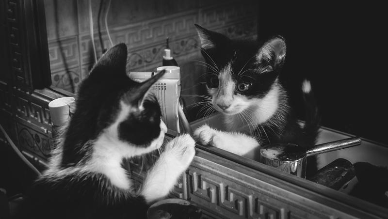 La curiosidad mató al gato (Oriol Navarro Muñoz)